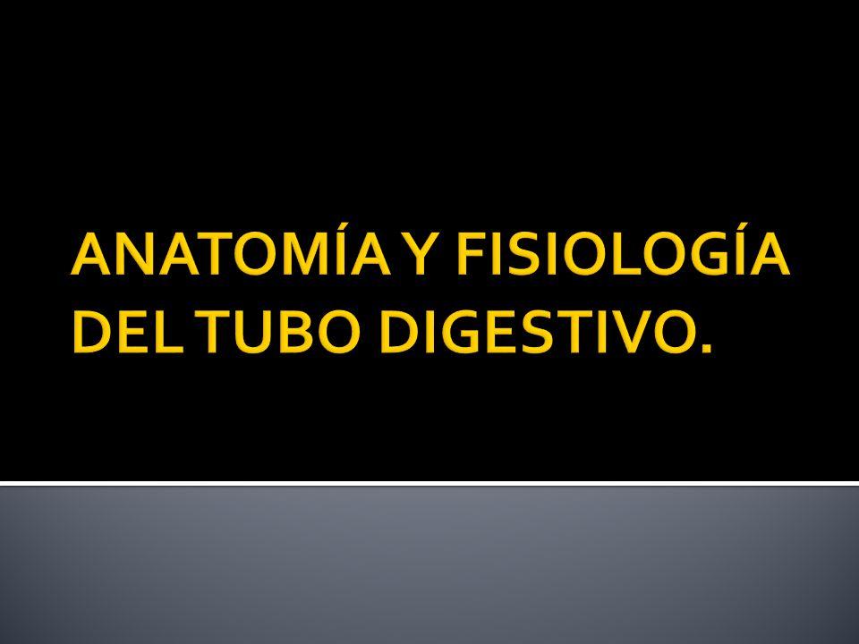 ANATOMÍA Y FISIOLOGÍA DEL TUBO DIGESTIVO. - ppt video online descargar