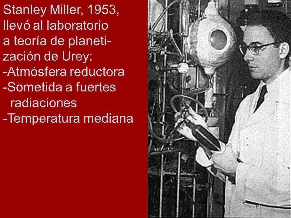 Stanley Miller, 1953, llevó al laboratorio. a teoría de planeti- zación de Urey: -Atmósfera reductora.