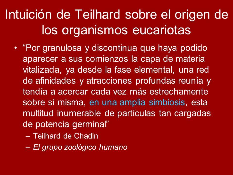 Intuición de Teilhard sobre el origen de los organismos eucariotas