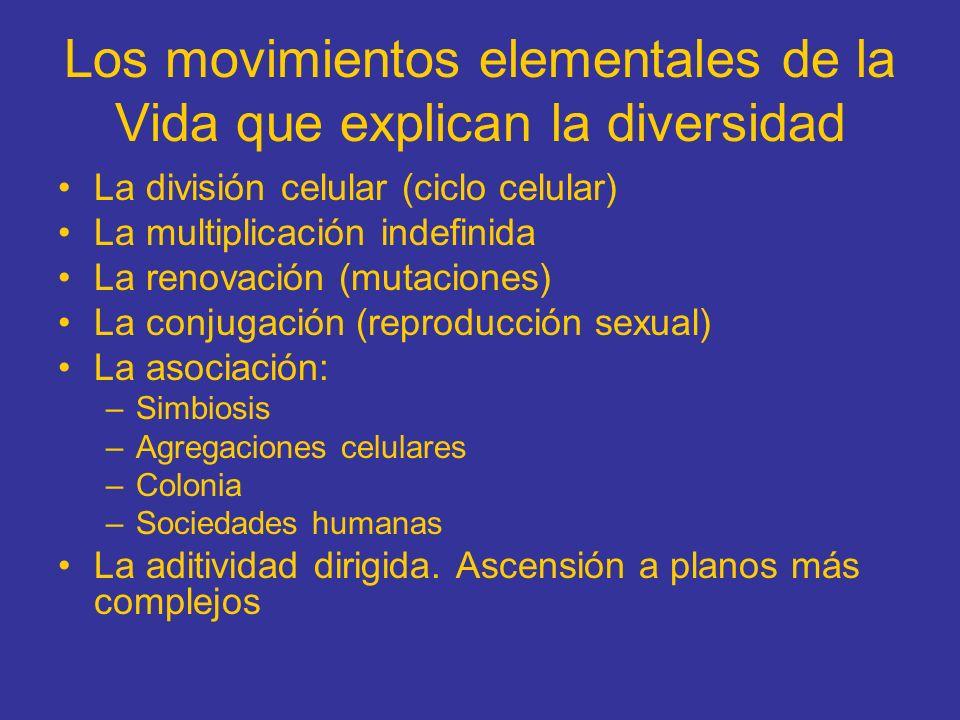 Los movimientos elementales de la Vida que explican la diversidad