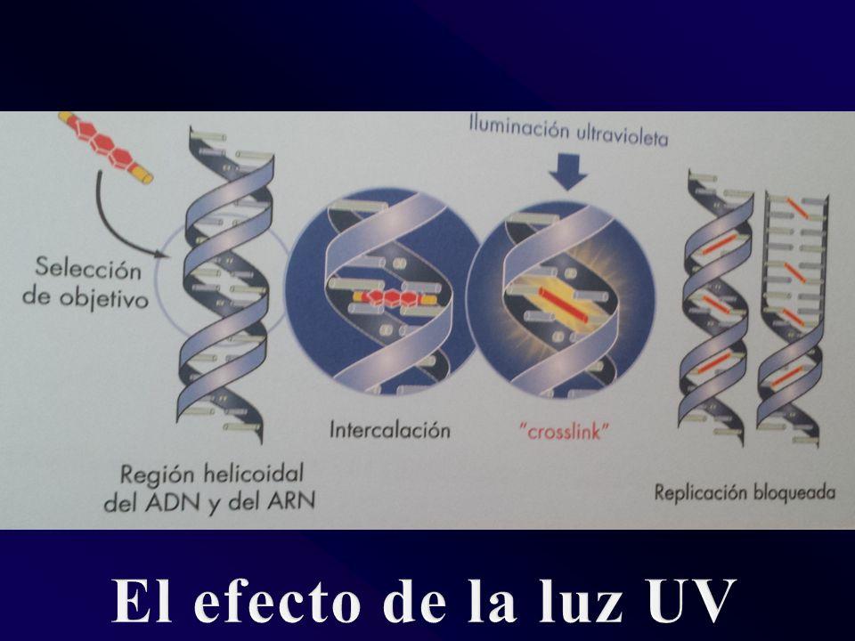 El efecto de la luz UV