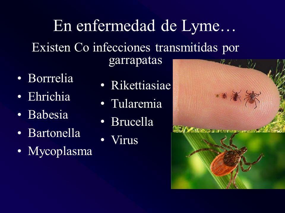 Existen Co infecciones transmitidas por garrapatas