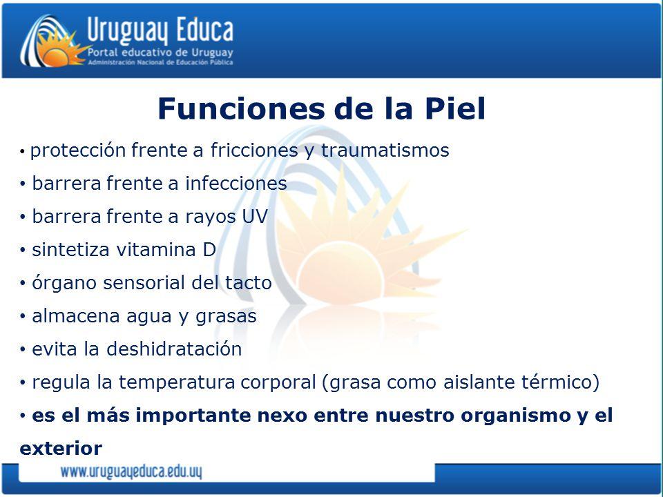 Funciones de la Piel barrera frente a infecciones