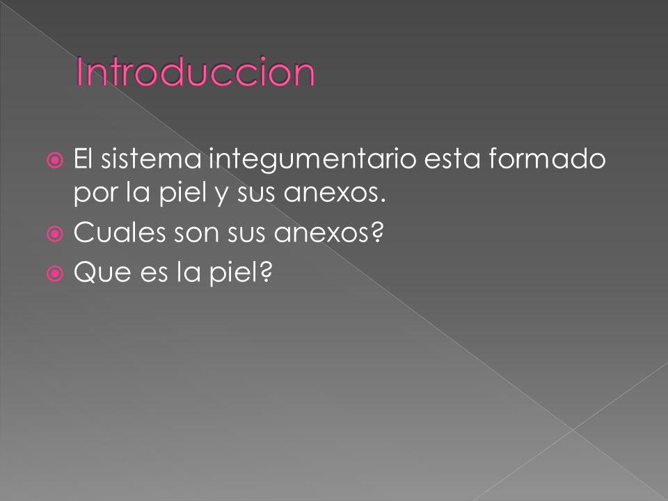 Introduccion El sistema integumentario esta formado por la piel y sus anexos. Cuales son sus anexos