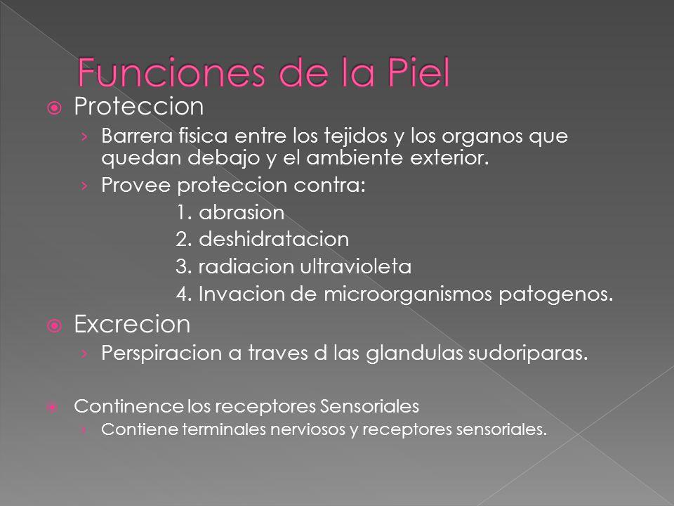 Funciones de la Piel Proteccion Excrecion
