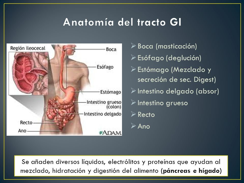 Perfecto Anatomía Y Fisiología A2 Hesi Guía De Estudio Ideas ...