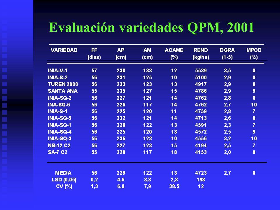 Evaluación variedades QPM, 2001