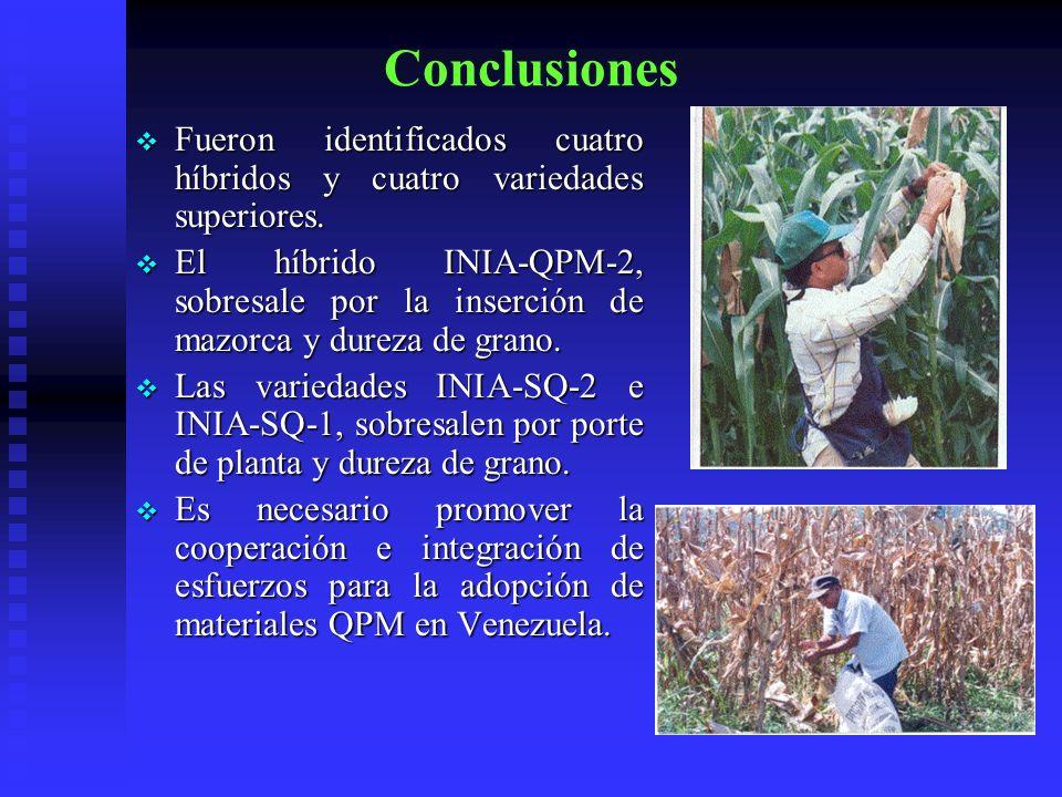 Conclusiones Fueron identificados cuatro híbridos y cuatro variedades superiores.