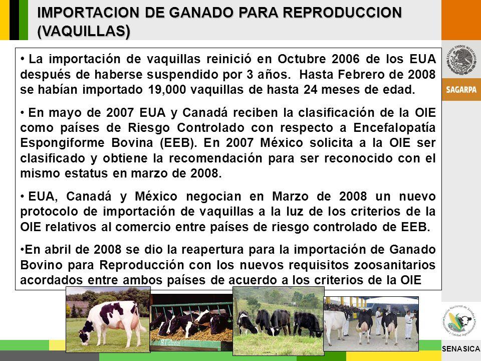 IMPORTACION DE GANADO PARA REPRODUCCION (VAQUILLAS)