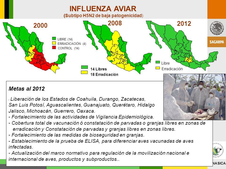 INFLUENZA AVIAR(Subtipo H5N2 de baja patogenicidad) 2008. 2012. 2000. LIBRE (14) ERRADICACIÓN (4) CONTROL (14)