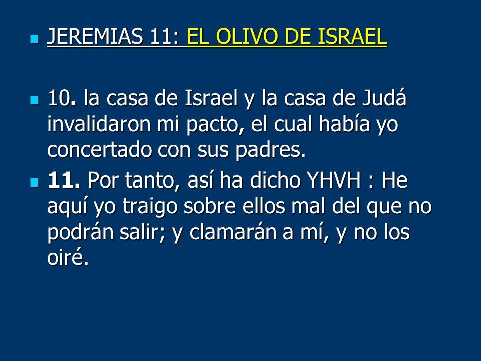 JEREMIAS 11: EL OLIVO DE ISRAEL
