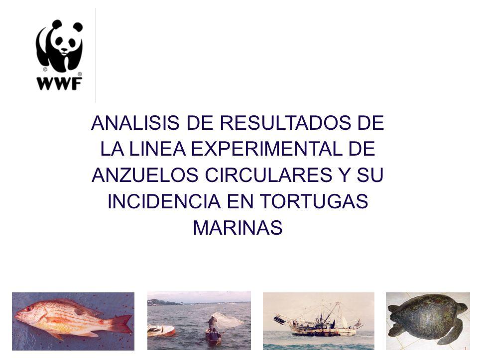 ANALISIS DE RESULTADOS DE LA LINEA EXPERIMENTAL DE ANZUELOS CIRCULARES Y SU INCIDENCIA EN TORTUGAS MARINAS