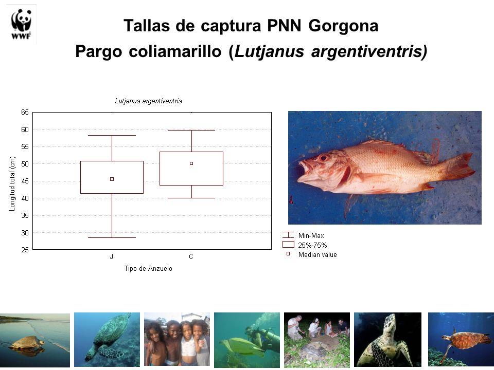 Tallas de captura PNN Gorgona