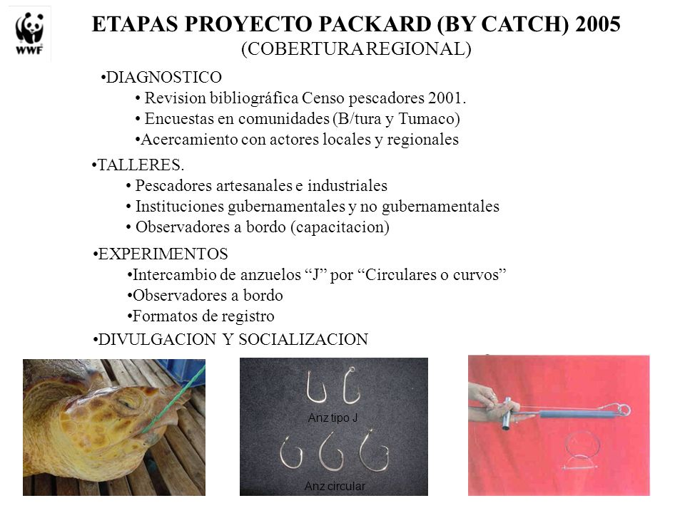 ETAPAS PROYECTO PACKARD (BY CATCH) 2005