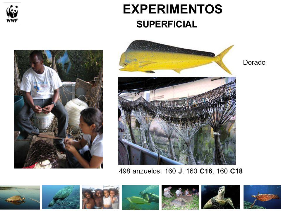 EXPERIMENTOS SUPERFICIAL Dorado 498 anzuelos: 160 J, 160 C16, 160 C18