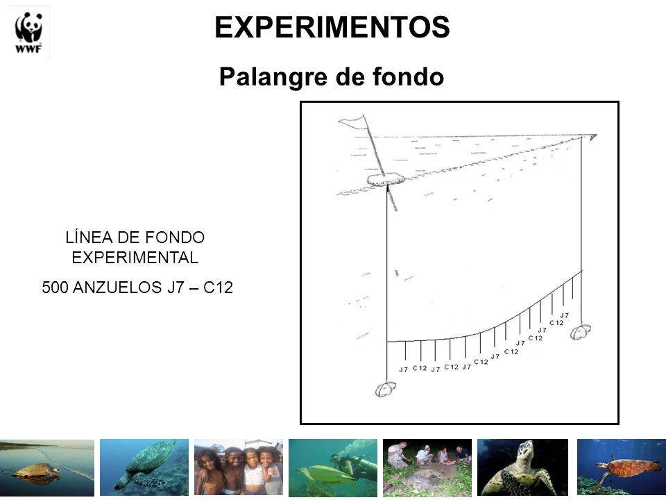 LÍNEA DE FONDO EXPERIMENTAL