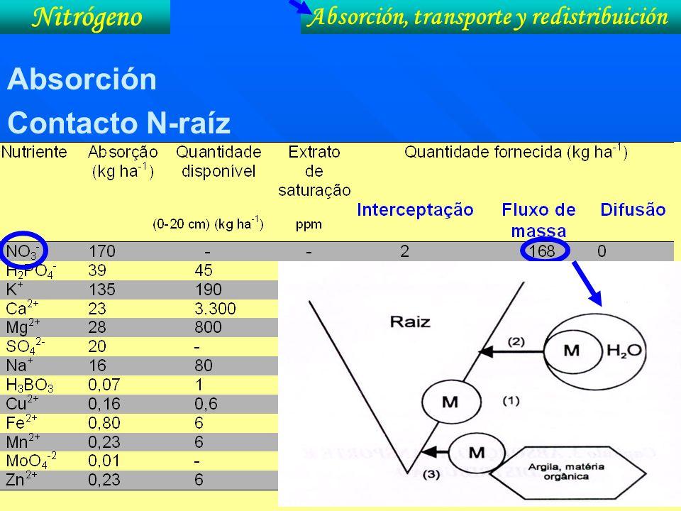 Nitrógeno Absorción Contacto N-raíz