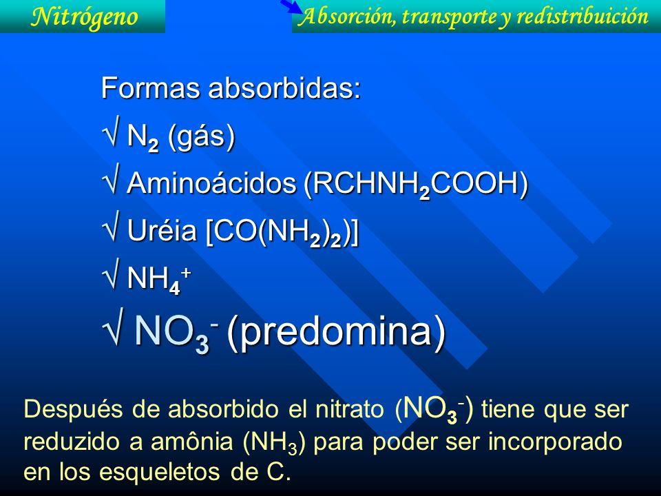  NO3- (predomina)  N2 (gás)  Aminoácidos (RCHNH2COOH)