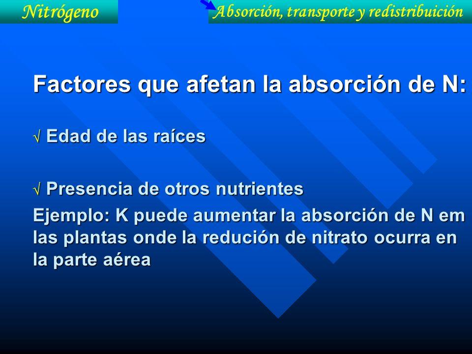 Factores que afetan la absorción de N:
