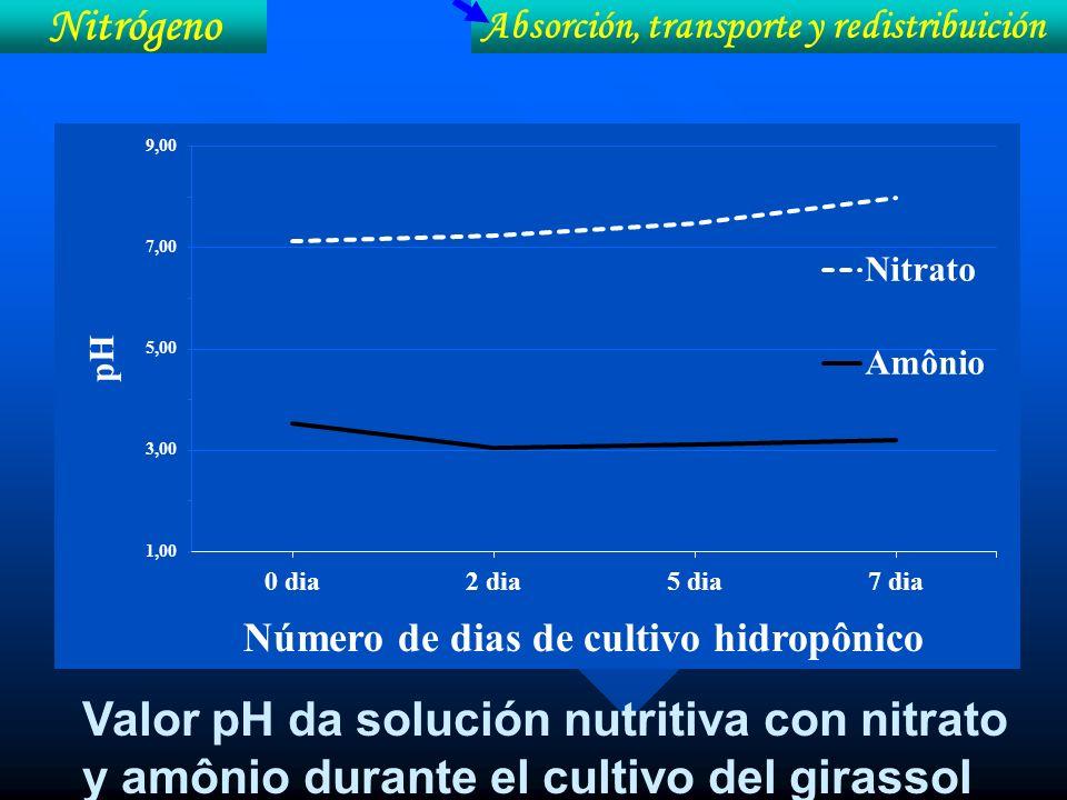 Nitrógeno Absorción, transporte y redistribuición.