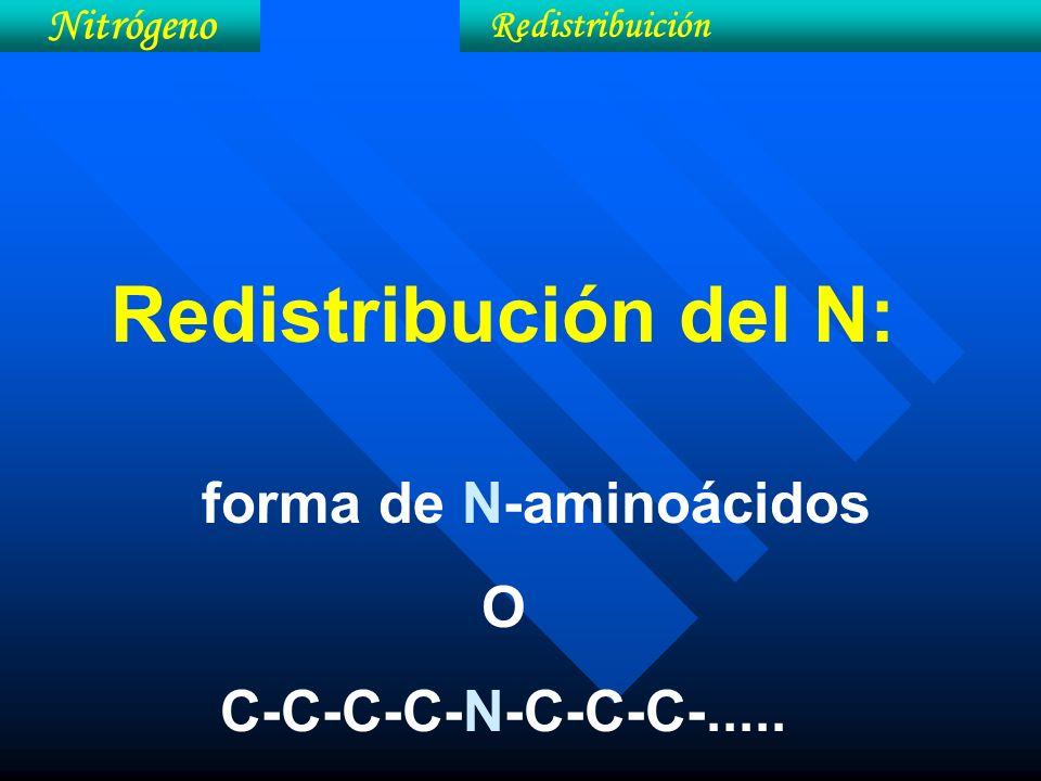 Redistribución del N: O C-C-C-C-N-C-C-C-..... Nitrógeno
