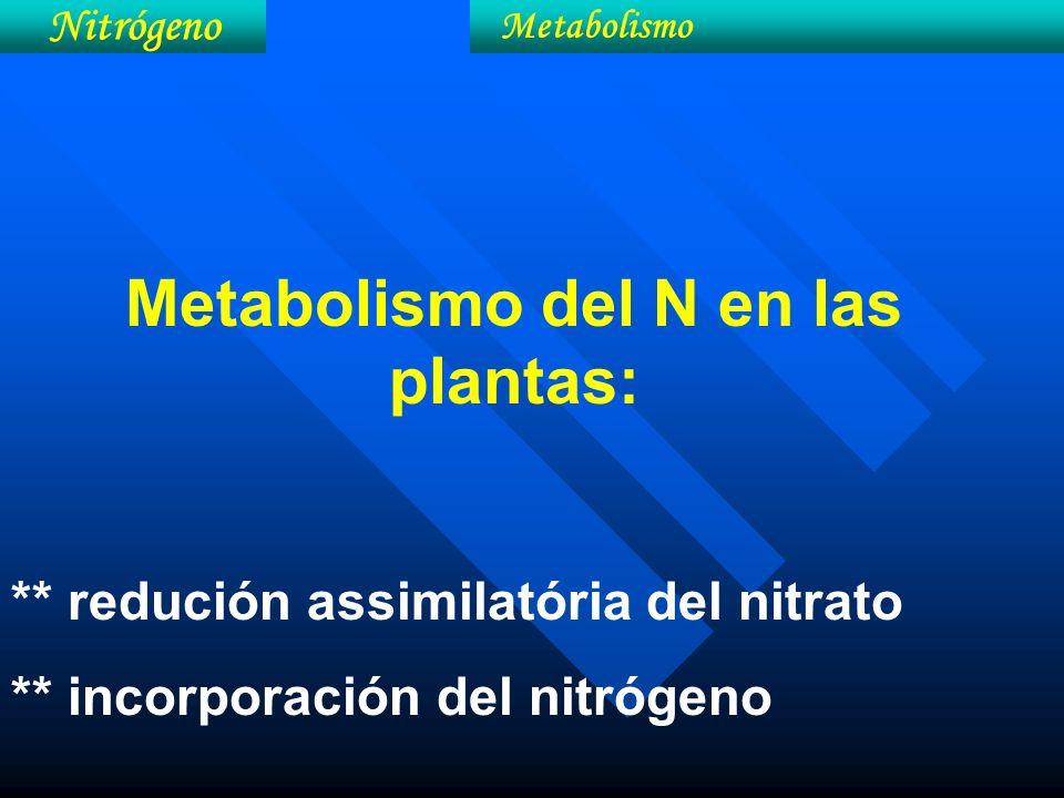 Metabolismo del N en las plantas: