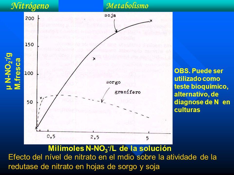 Nitrógeno Metabolismo µ N-NO2-/g M.fresca