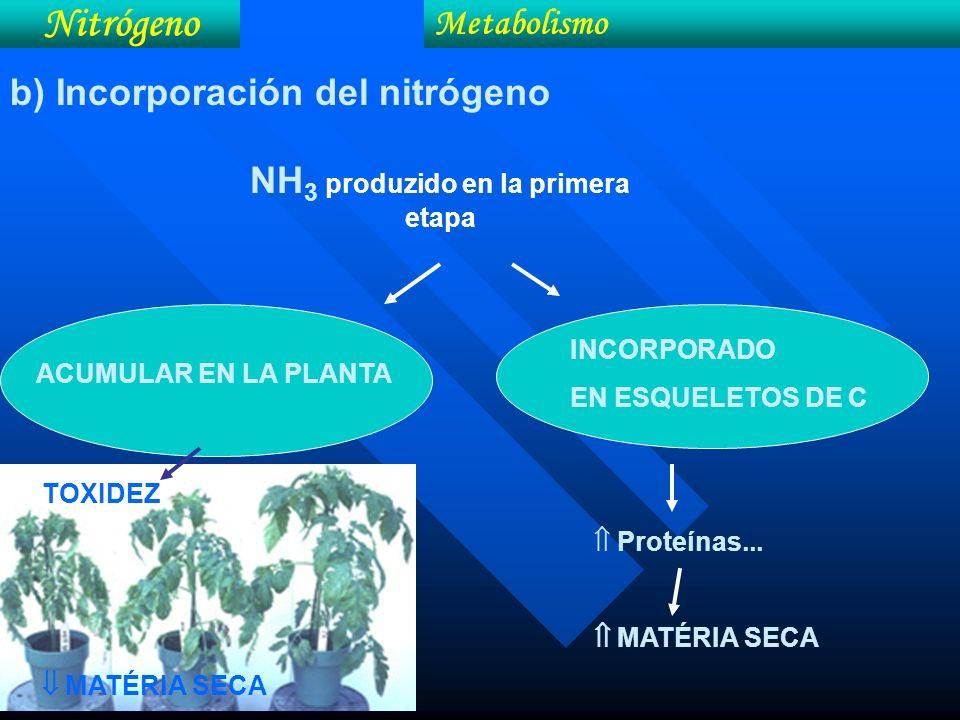 NH3 produzido en la primera etapa