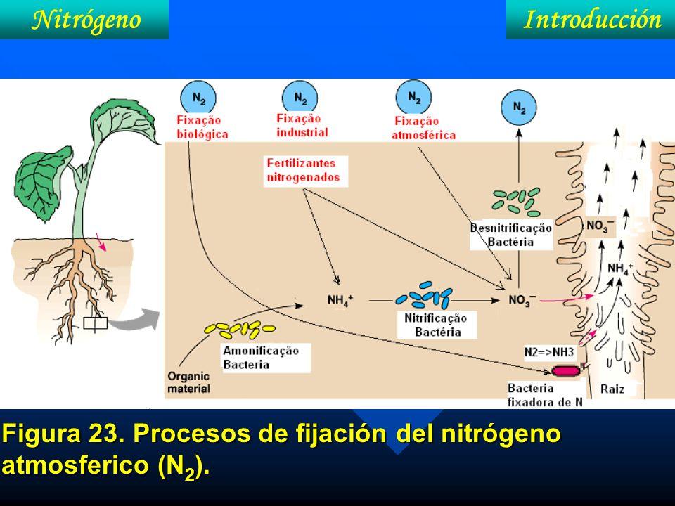 Figura 23. Procesos de fijación del nitrógeno atmosferico (N2).