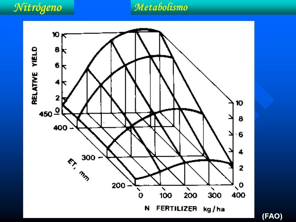 Nitrógeno Metabolismo (FAO)