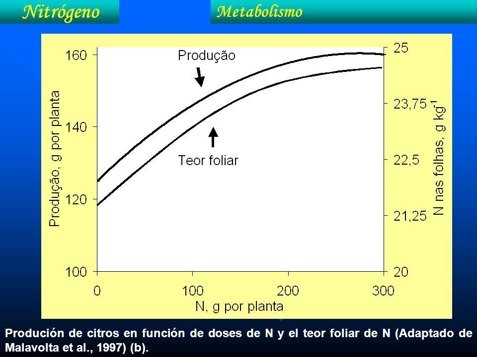 Nitrógeno Metabolismo