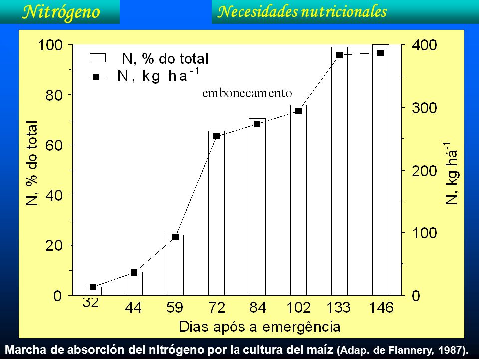 Nitrógeno Necesidades nutricionales