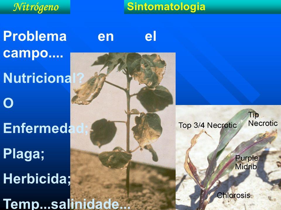 Problema en el campo.... Nutricional O Enfermedad; Plaga; Herbicida;