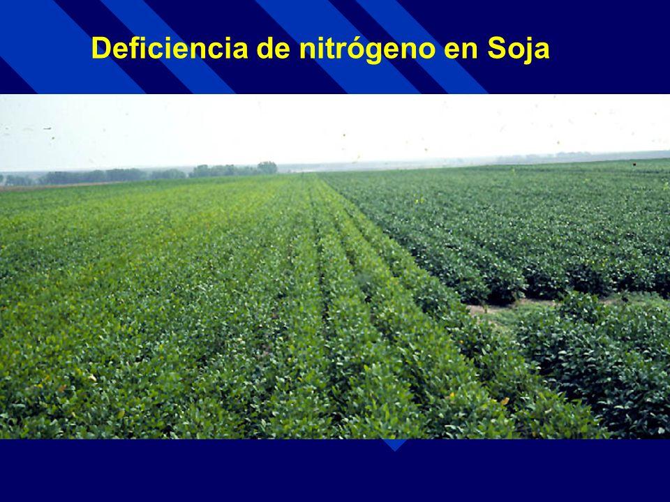 Deficiencia de nitrógeno en Soja