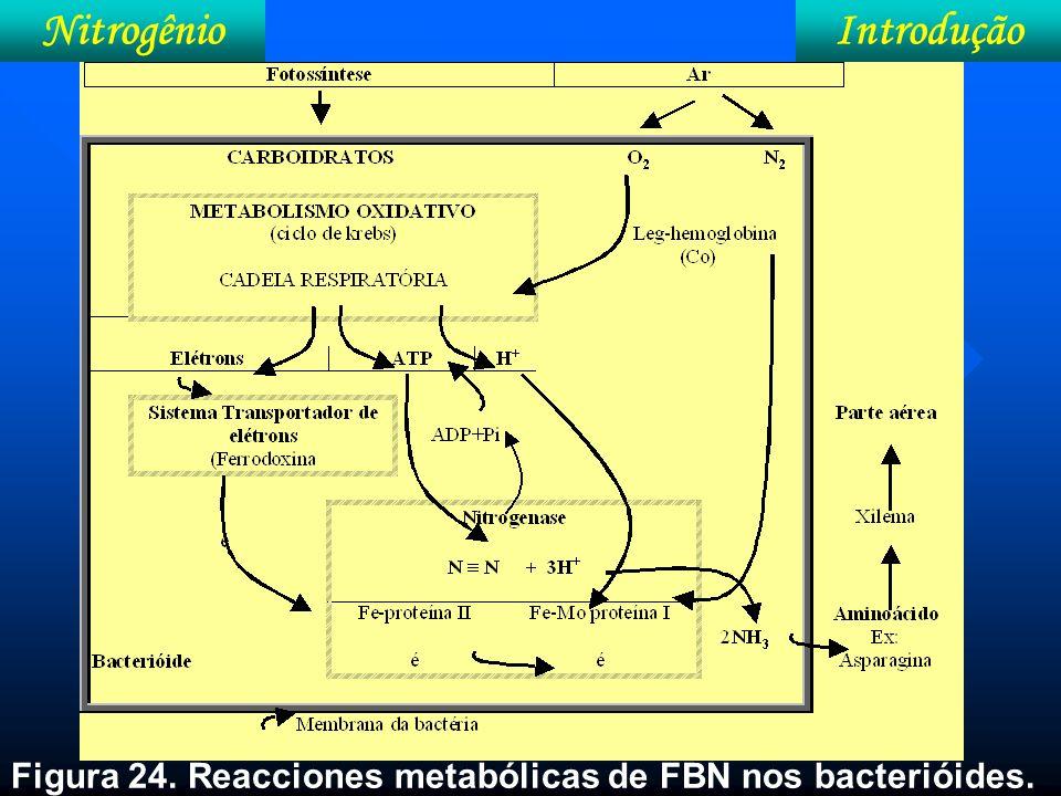 Nitrogênio Introdução