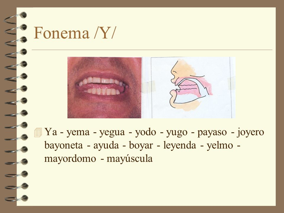 Fonema /Y/ Ya - yema - yegua - yodo - yugo - payaso - joyero bayoneta - ayuda - boyar - leyenda - yelmo - mayordomo - mayúscula.