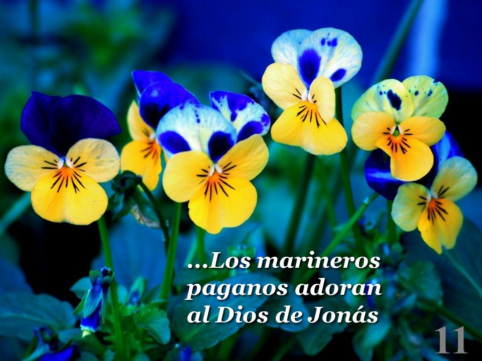 ...Los marineros paganos adoran al Dios de Jonás