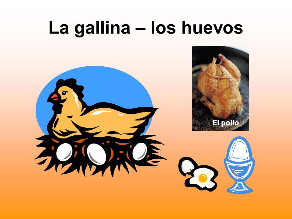 La gallina – los huevos El pollo