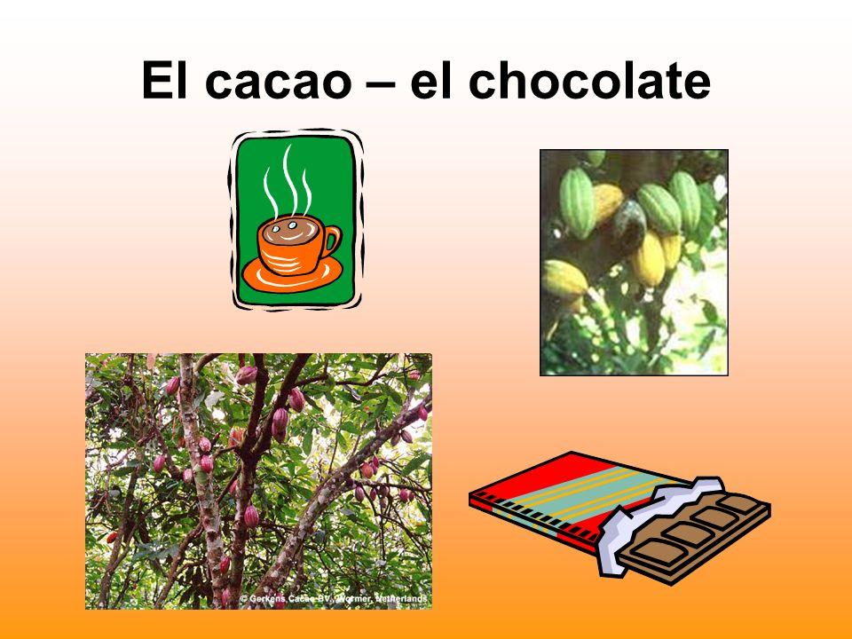 El cacao – el chocolate