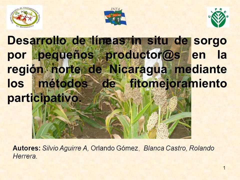 Desarrollo de líneas in situ de sorgo por pequeños productor@s en la región norte de Nicaragua mediante los métodos de fitomejoramiento participativo.