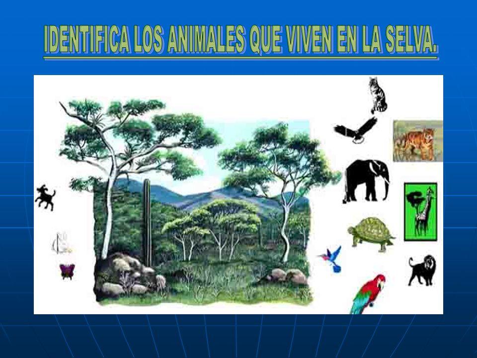 IDENTIFICA LOS ANIMALES QUE VIVEN EN LA SELVA.