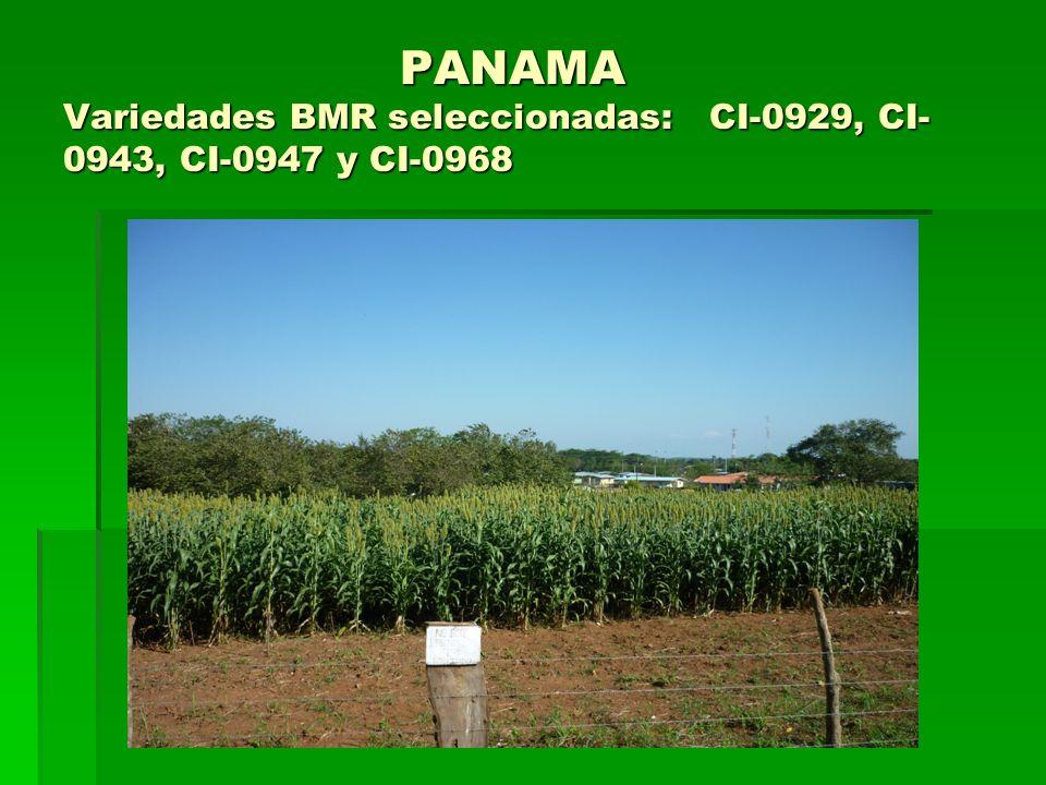 PANAMA Variedades BMR seleccionadas: CI-0929, CI-0943, CI-0947 y CI-0968