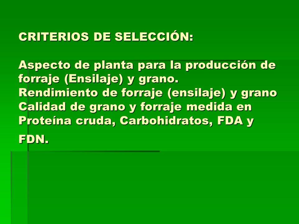 CRITERIOS DE SELECCIÓN: Aspecto de planta para la producción de forraje (Ensilaje) y grano.