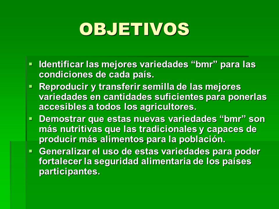 OBJETIVOS Identificar las mejores variedades bmr para las condiciones de cada país.