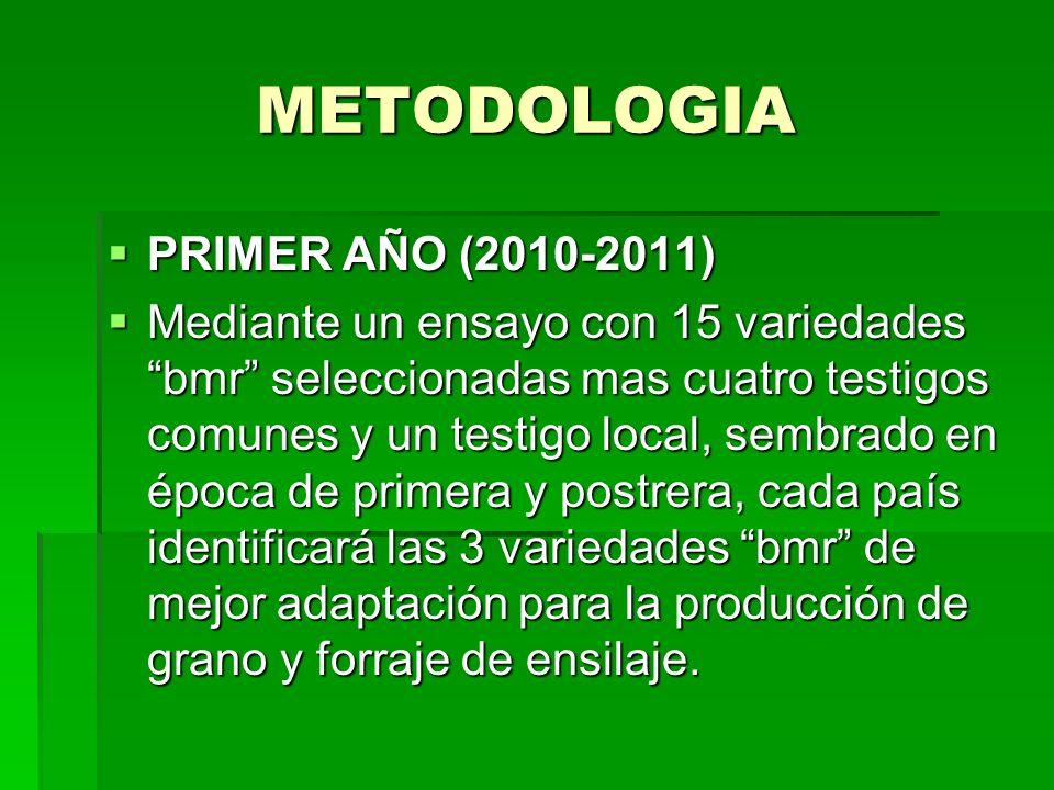 METODOLOGIA PRIMER AÑO (2010-2011)
