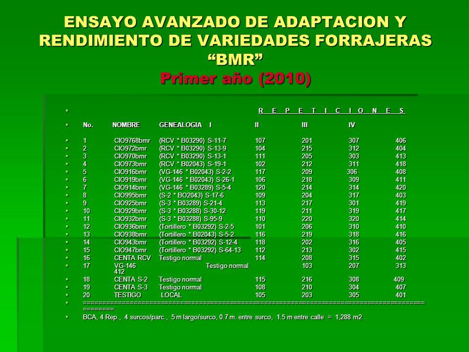 ENSAYO AVANZADO DE ADAPTACION Y RENDIMIENTO DE VARIEDADES FORRAJERAS BMR Primer año (2010)