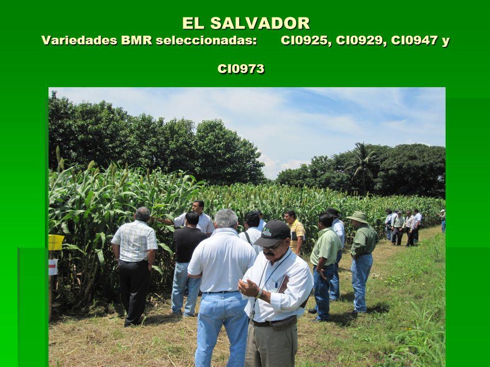 EL SALVADOR Variedades BMR seleccionadas: CI0925, CI0929, CI0947 y CI0973