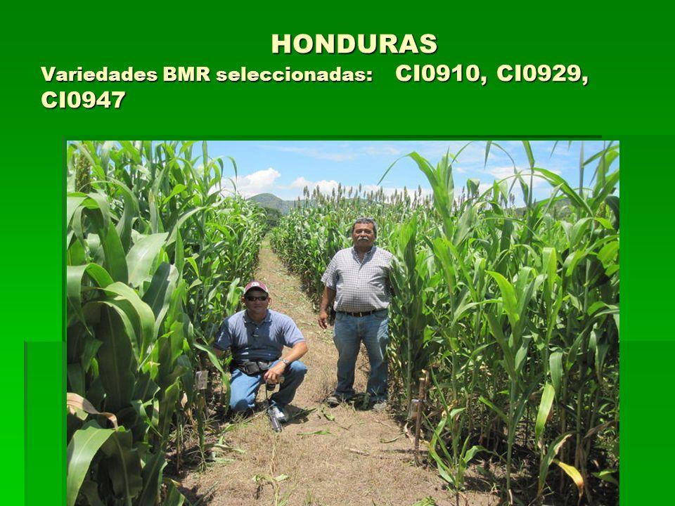 HONDURAS Variedades BMR seleccionadas: CI0910, CI0929, CI0947