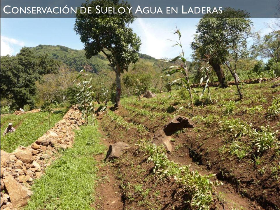 Conservación de Suelo y Agua en Laderas