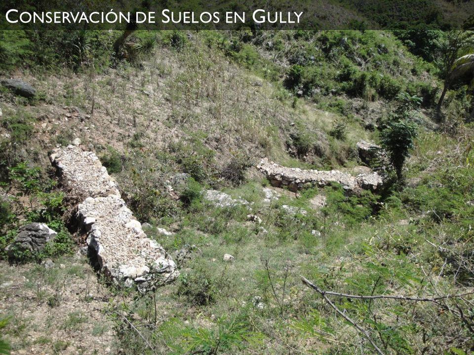 Conservación de Suelos en Gully